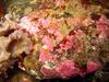 Crust forming redalgae by Jan  Nicolaisen, Orbicon
